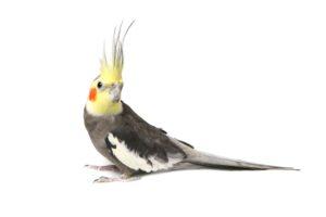 Bird Vet Melbourne