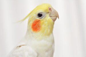 Melbourne Bird Veterinary Clinic