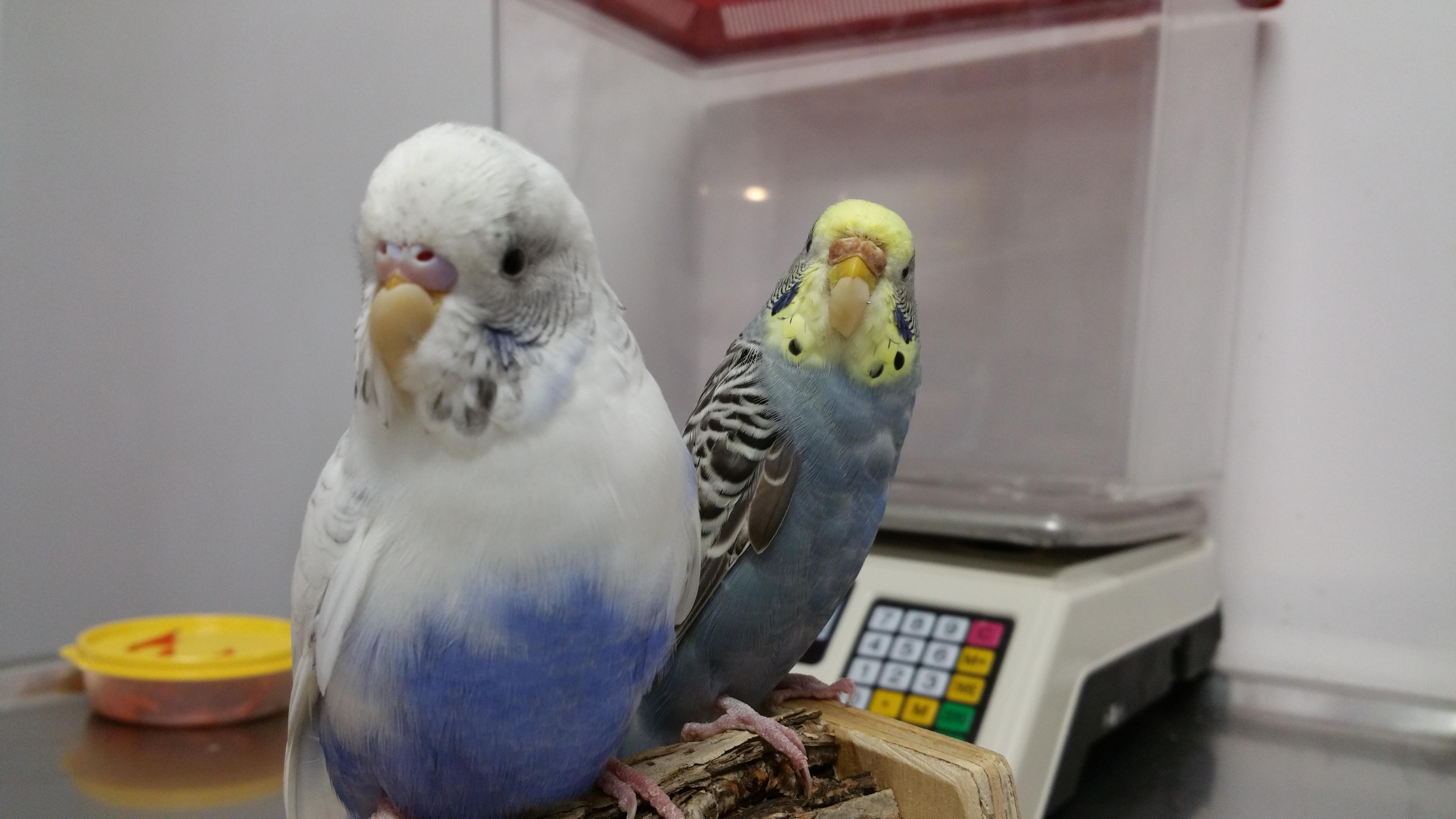 Bird beak repair